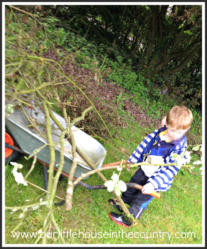 """Doodles loves to """"grown up"""" jobs out in the garden with daddy!"""